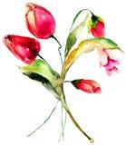 blommar röda tulpan Royaltyfri Foto