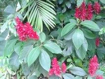 blommar rött tropiskt royaltyfri bild