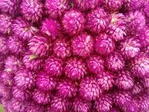 Blommar raster Royaltyfria Bilder