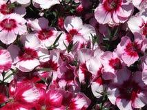 blommar red Royaltyfri Fotografi