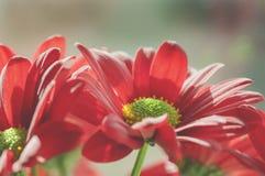 blommar red Royaltyfria Foton