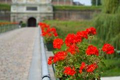 blommar red Arkivbilder