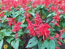 blommar red Arkivbild