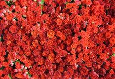 blommar red steg Arkivbilder