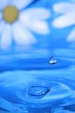 blommar reflexionswatersplash Royaltyfria Bilder