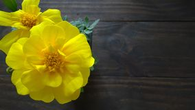 blommar ringblommayellow royaltyfri bild