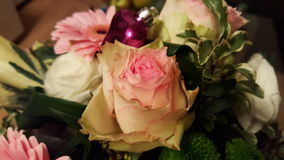 blommar ro Royaltyfria Foton