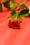blommar ro Arkivfoto