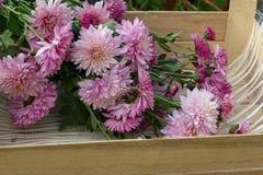Blommar rosa färger Royaltyfri Fotografi