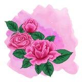 Blommar rosa rosa färger för vektor den dekorativa illustrationen Arkivfoto