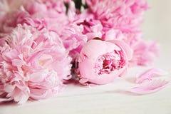 blommar rosa surface trä för pionen Arkivbild
