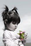 blommar rosa wild för näve Fotografering för Bildbyråer
