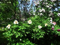 Blommar sällsynta blommor i botaniska trädgården arkivbilder