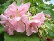Blommar så härligt anslår därefter att alla longs Royaltyfria Foton