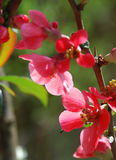 blommar s-fjädern Royaltyfri Bild