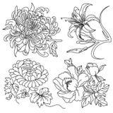 Blommar samlingen Arkivbilder