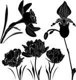 Blommar samlingen Fotografering för Bildbyråer