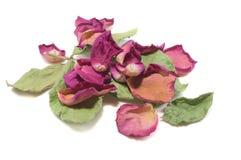 Blommar sammansättning av torkat steg blommor valentin för dag s Drie Royaltyfri Bild