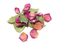 Blommar sammansättning av torkat steg blommor valentin för dag s Drie Royaltyfri Fotografi