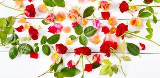 Blommar sammansättning bakgrund vita isolerade röda ro fla Arkivbilder