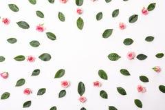 Blommar sammansättning Ramen med steg blommor och eukalyptusfilialer Lekmanna- lägenhet, bästa sikt Arkivfoto