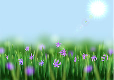 blommar scilla Royaltyfria Bilder