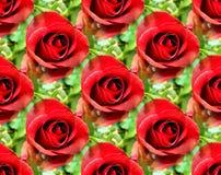 blommar seamless Royaltyfri Bild