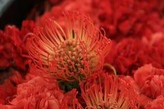 blommar seamless lawn royaltyfri fotografi