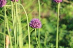 blommar seamless lawn royaltyfri foto