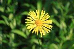 blommar seamless lawn arkivbilder