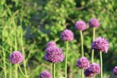 blommar seamless lawn royaltyfria bilder