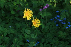 blommar seamless lawn arkivfoto