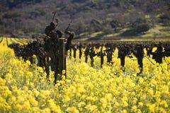 blommar senapsgultt Napa Valley för druvan vines royaltyfri fotografi