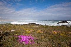 blommar sjösidan arkivbild