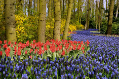 blommar skogen Royaltyfri Bild