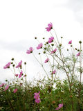 blommar skogen arkivbild