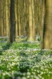 blommar skogen Royaltyfri Fotografi