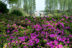 blommar skogen arkivfoto