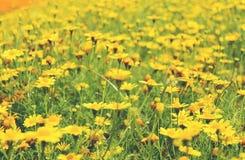 blommar skogen Royaltyfria Bilder