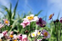 Blommar sky 3 fotografering för bildbyråer