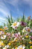 Blommar skyen fotografering för bildbyråer