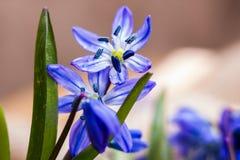 blommar snowdropsfjädern Royaltyfria Foton