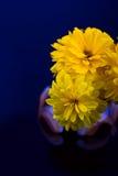 blommar sol- heliopsis Arkivfoto