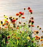 blommar solljus Arkivbild