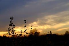 blommar solnedgång royaltyfria foton