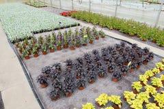 Blommar som växer Fotografering för Bildbyråer