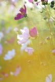 blommar sommar arkivfoto