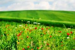 blommar sommar Royaltyfri Foto