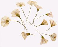blommar sommar arkivbild
