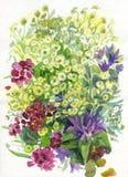 blommar sommarvattenfärg Arkivbild